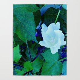 Cotton Blossom Poster