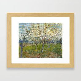 Orchard with Blossoming Apricot Trees by Vincent van Gogh Framed Art Print