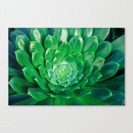 Botanical Gardens - Succulent #686 Canvas Print