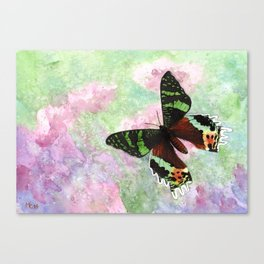 Urania Ripheus Butterfly Canvas Print