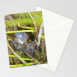 Toad with bulging throat Stationery Cards