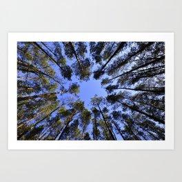 Tree Sky Art Print
