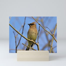 Cedar Waxwing Bird (2) by Reay of Light Mini Art Print