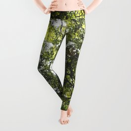 Looking up at the Trees Leggings