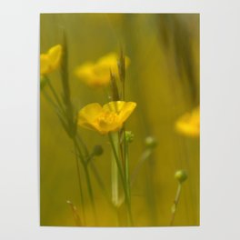 Yellow flowers 4 Poster