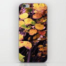 Autumn Palette iPhone Skin