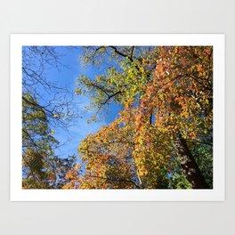 Changing Leaves at Biltmore Art Print