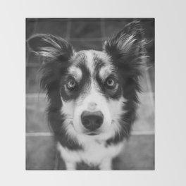 Tri-coloured border collie. Throw Blanket