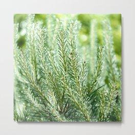 Pine Tree with Raindrops 3 Metal Print