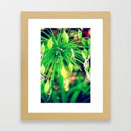 PurpleFlowers Framed Art Print