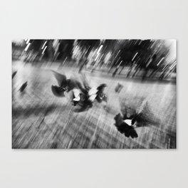 Grainy Pigeons Canvas Print