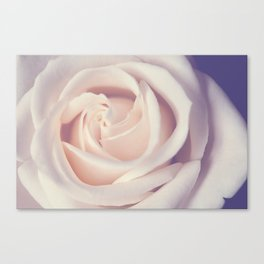 An Offering White Rose Canvas Print