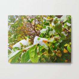 Winter bush Metal Print