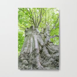 Mylor Walk - Tall Tree Metal Print