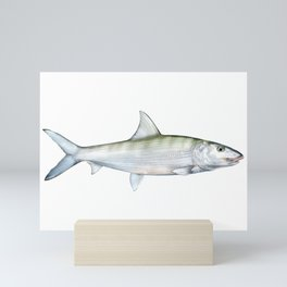 Bonefish Mini Art Print