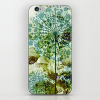 dandelion iPhone & iPod Skins featuring dandelion by clemm