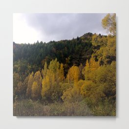 Autumn Leaves, NZ Metal Print