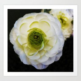 white and green flower Art Print