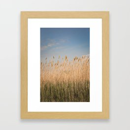 Nantucket Gold Framed Art Print