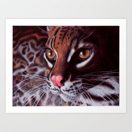 Margay Cat - BIC Ballpoint Pen Art Print