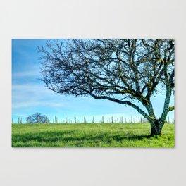Rex Hill Tree Canvas Print