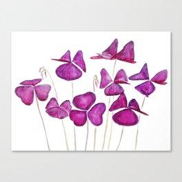 purple clover leaves Canvas Print