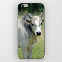 Grey Mini Brahman Bull iPhone Skin
