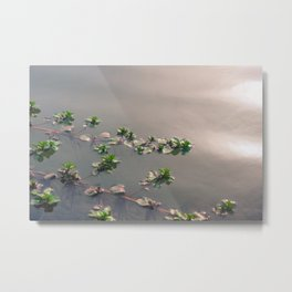 Green leaves on a metallic water background Metal Print