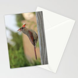 Hungry Cardinal  Stationery Cards