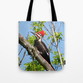 Male Pileated Woodpecker Tote Bag