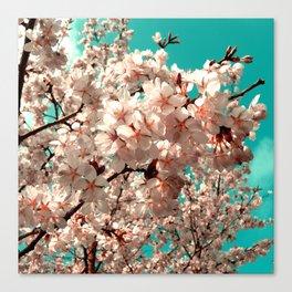 cherry blossom III Canvas Print