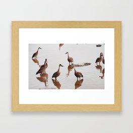 Flush of Ducks Framed Art Print