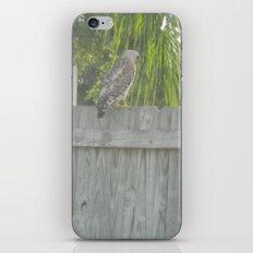 Falcon gazing iPhone & iPod Skin