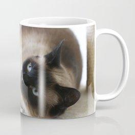 Sulley, A Siamese Cat Coffee Mug