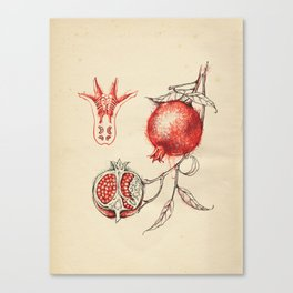Cabinet of Curiosities No.3 Canvas Print
