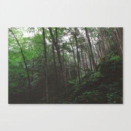 Ice Glen I Canvas Print