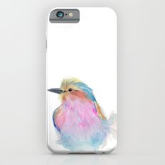 Lilac-breasted roller iPhone 6s Slim Case