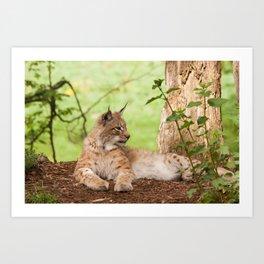 Lynx Lynx Art Print