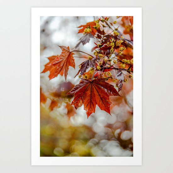 Maple Blossom Art Print