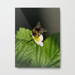 A bee on a strawberry flower Metal Print