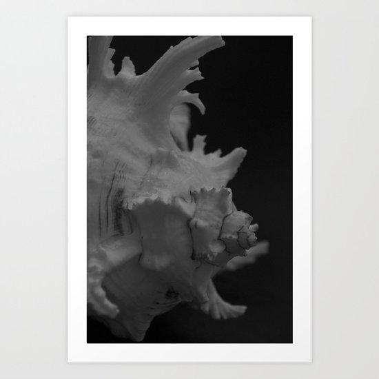 Muricidae Hexaplex cichoreus Art Print