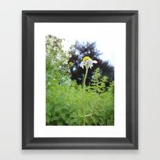 Lonely Flower Framed Art Print