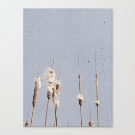 cat tails and concrete. odd. Canvas Print