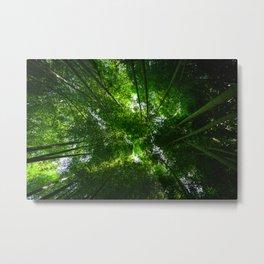 Kamakura Bamboo Metal Print