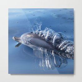 Dolphins and bubbles Metal Print