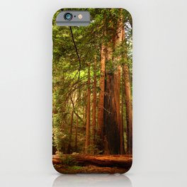 Muir Woods Walkway iPhone Case