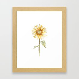 Sunflower 01 Framed Art Print