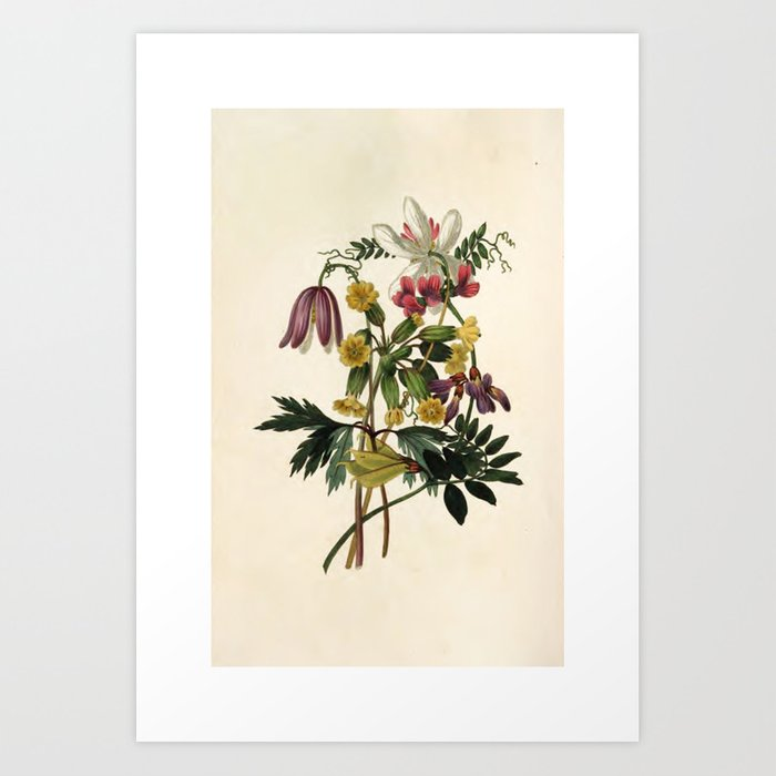 """Wildflowers from """"The Moral of Flowers"""" (1833) by Rebecca Hey Art Print"""