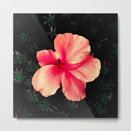 Beautiful Flower Metal Print