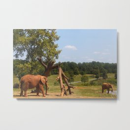 Red Elephants Metal Print